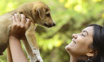 Científicos afirman que los humanos se pueden comunicar con los perros