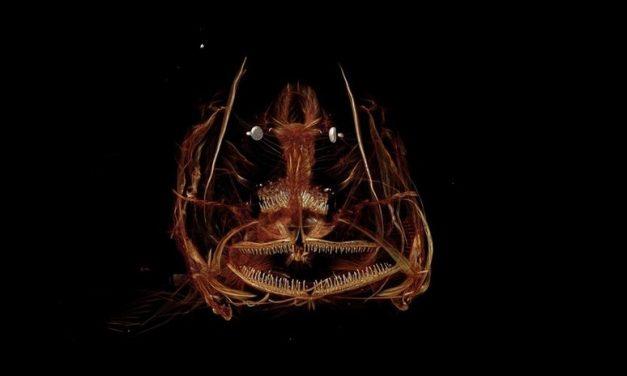 Descubren terrorífico pez que vive a más de 8.000 metros de profundidad