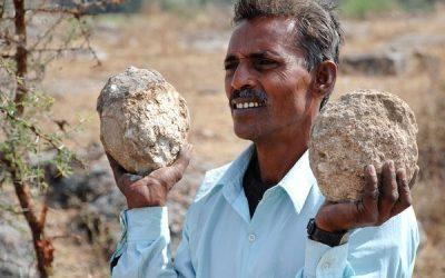 Hallan restos de Misteriosa Criatura similar a los Dinosaurios en India