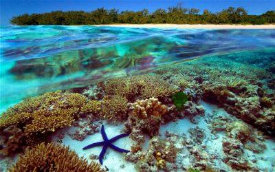 Ya ha muerto la mitad de la fauna de la Gran Barrera de Coral en Australia