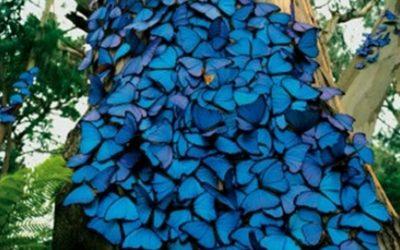 Científicos cerca de Conocer cómo Aprendieron a Volar los Insectos