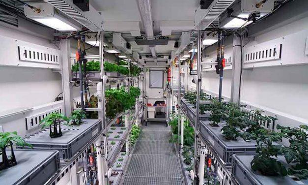 Producen vegetales sin tierra, luz solar ni pesticidas
